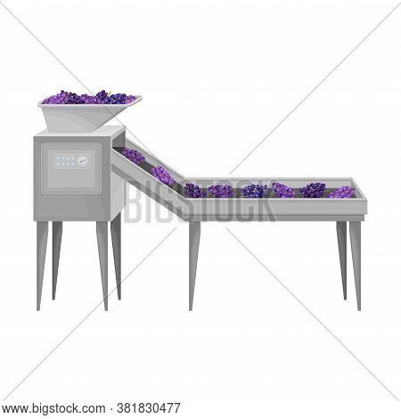 Destemmed Grapes Rested On Conveyor Belt As Sorting Process Vector Illustration