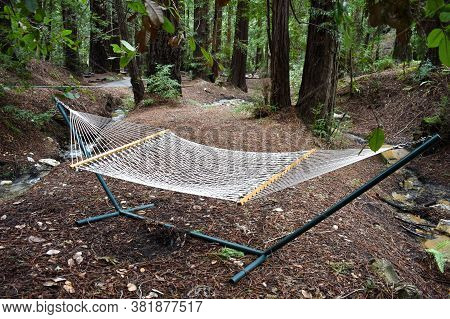 Wonderful Spot To Relax In A Hammock In The Woods Next To A Babbling Brook.