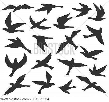 Bird Silhouettes. Flying Birds Flock, Animal Wildlife Migration, Doves Soar In Sky. Black Tattoo Tem