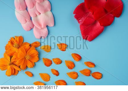 Neatly Arranged Rose Petals, Red And Pink, Cosmei-orange And Blossoming Buds Of Cosmea On A Blue Bac