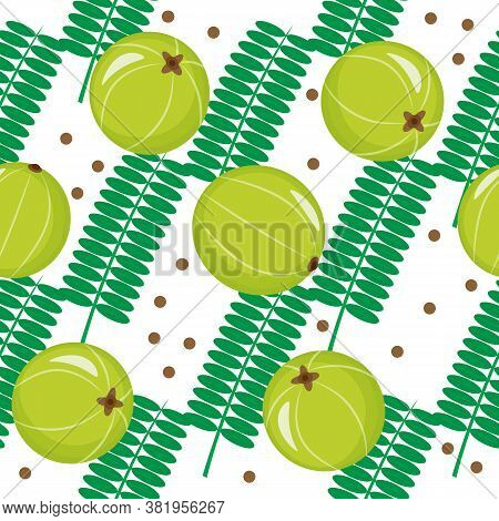 Seamless Pattern With Amla, Indian Gooseberry On White Background. Cosmetics And Medical Plant. Vect