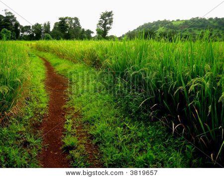 Weg, um Farmland