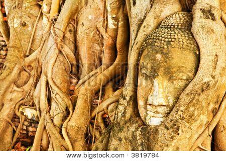 Sand Stone Head Of Buddha