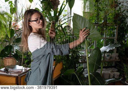 Woman Gardener In Grey Linen Dress Taking Photo Of Large Caladium Green Leaf On Smartphone In Her Gr