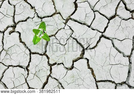 Plant Growing Cracked Dry Soil, Cracked Earth, Texture Of Grungy Dry Cracking Parched Earth. Global