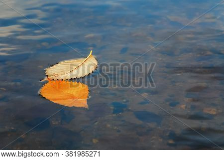 Two Yellow Autumn Fallen Leaves In Water