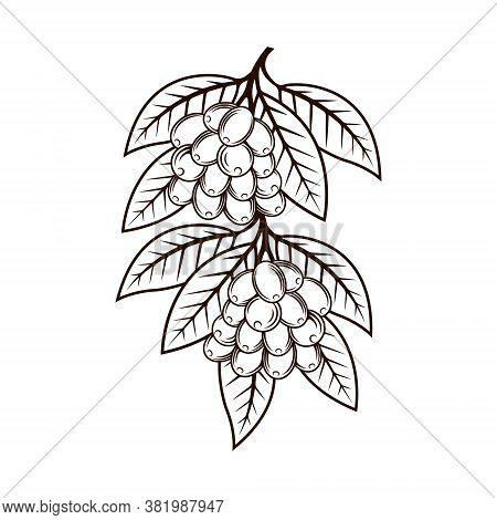 Coffee Tree. Coffee Logo . Coffee vector. Coffee Logo  vector. Coffee cup Logo. Coffee Shop logo. Coffee beans Logo. Coffee Tree design. Coffee Tree Logo vector. Coffee tree illustration. Coffee Tree Logo. Coffee Tree vector design illustration