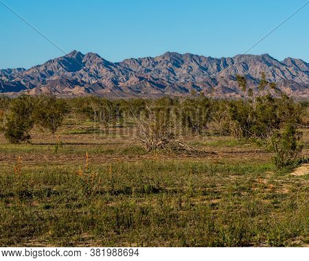 The Chocolate Mountains In The Sonoran Desert In The Background Of Arid Vegetation Consisting Of Bus