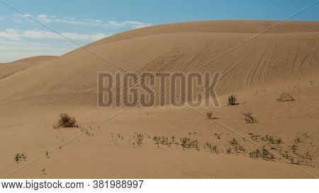 The Beautiful Patterns And Curves Of The Sand Dunes  Of Southern California, Usa, Algodones Dunes. O