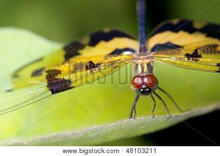 dragonfly with the golden wings