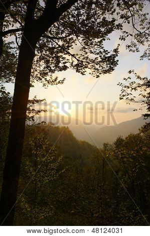 Soft Sunrise On Trees And Mountains
