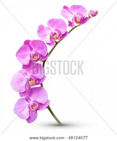 Vector flower exotic orchid branch