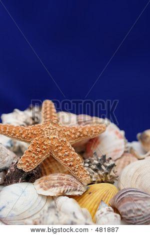Starfish And Shell On Blue