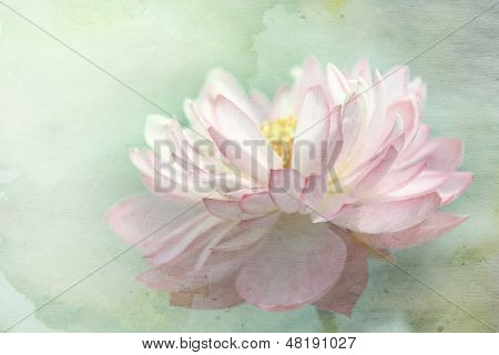 Lotus flower on grunge background