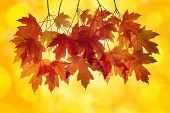 Red Maple Tree Leaves in Autumn with Orange Background and Blurred Bokeh Lights poster