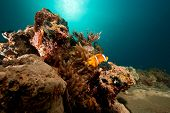 ocean coral sun and anemonefish taken in the red sea. poster