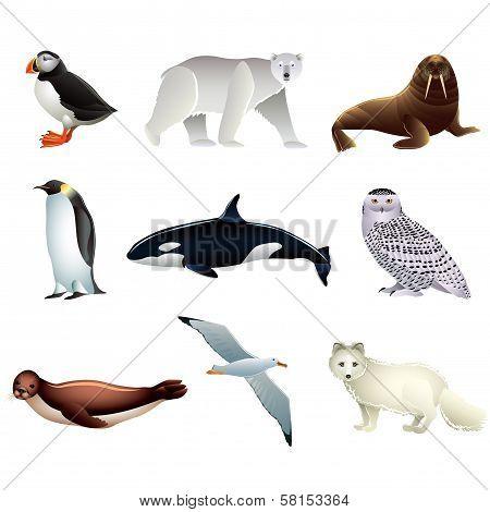 Arctic Animals Vector Set