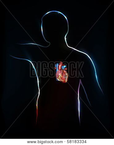 Human silhouette and heart anatomy bright and colorful design back background. poster