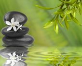 Spa still life with white flowers on black stones and bamboo leafs in the water poster