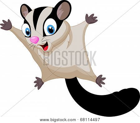 Vector illustration of Sugar glider cartoon isolated on white background poster
