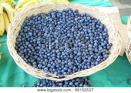 Harvest of fresh acai berries