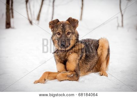Mixed breed dog on the snow