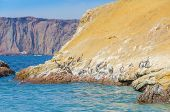 Paracas National Reserve, Peru - pelicans poster