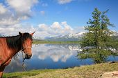 Horse and the view on mountain lake poster