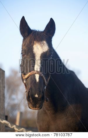 Saddle Horse Standing In The Corral Rural Autumn Scene