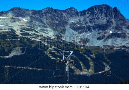 Pine trees and ski path