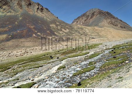 Mountain Landscape With River And Feeding Yaks