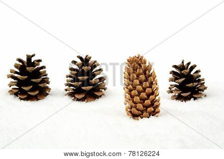 Christmas Pine Cone On Snow Stands Out Of Crowd In Line