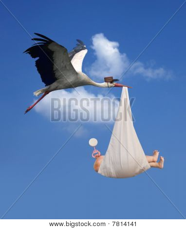 Storch & Baby