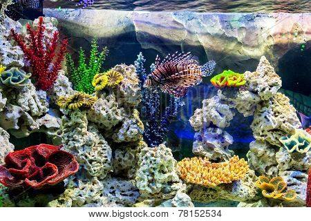 The Underwater World. Bright Exotic Tropical Coral Fish In The Red Sea Artificial Environment Of The