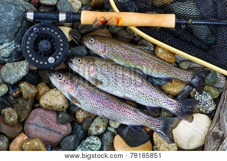 Trout Fishing Success