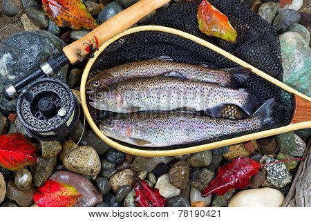 Autumn Trout Fishing