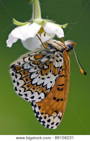 A Butterly In A Flower