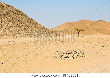 Lonely Tree In The Egyptian Desert