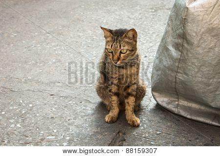 Homeless Cat On Street