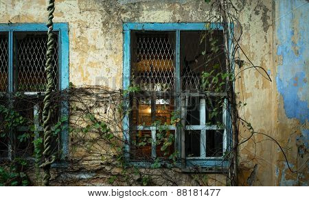 Window covered with plants