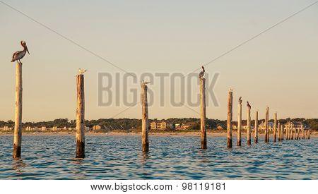 Birds On Pylons
