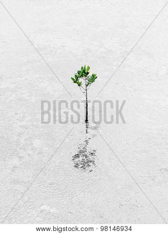 Plant Growing Through Dessert Survive Business Conceptual