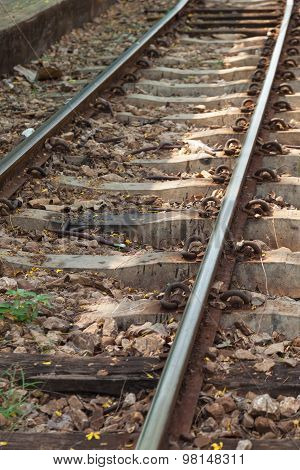 railway has a secondary timber and cement tracks. Last the longest in the country.
