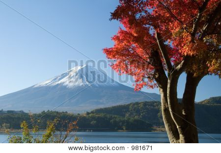 Mount Fuji In Fall Vii