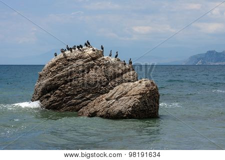 Shags On Sea-stone Near Foot Of Meganom Cape, Crimea, Russia.