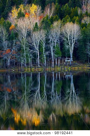 Autumn Trees Reflections Water