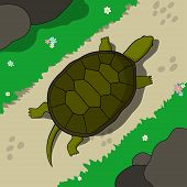 Tortoise crawling on a footpath in a sunny day. Hand drawn tortoise illustration in cartoon style. poster