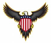 Patriotic American bald eagle, wings spread looking to one side, holding stars and stripes shield, sharp illustration. poster
