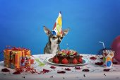Chihuahua at table wearing birthday hat and looking at birthday cake in front of blue background poster
