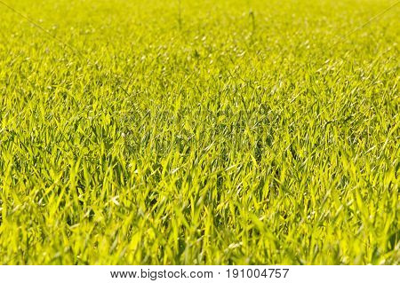 Perfect green background by the fresh grass. Copy space.